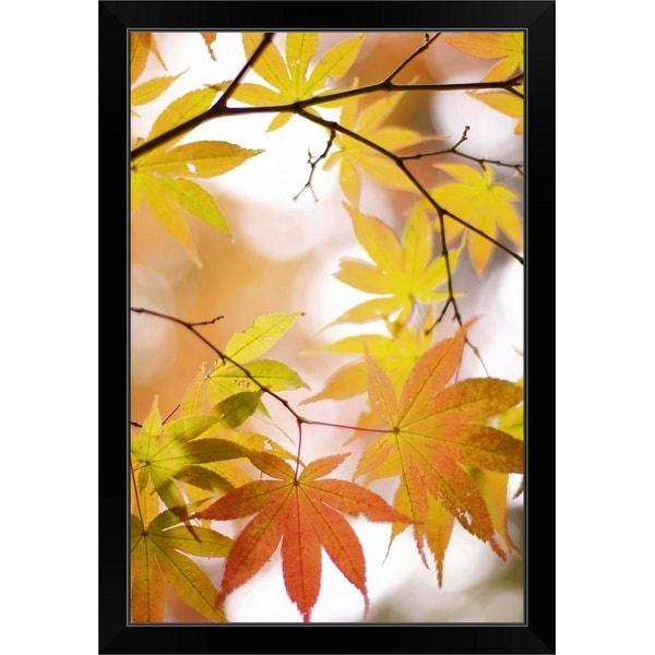 """""""Autumn leaves with blurred background."""" Black Framed Print"""