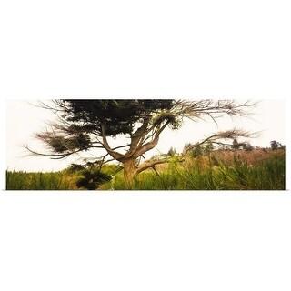 """Tree and plants in an Arboretum, Washington Park, Seattle, Washington State"" Poster Print"