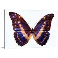 Premium Thick-Wrap Canvas entitled Butterfly - Multi-color