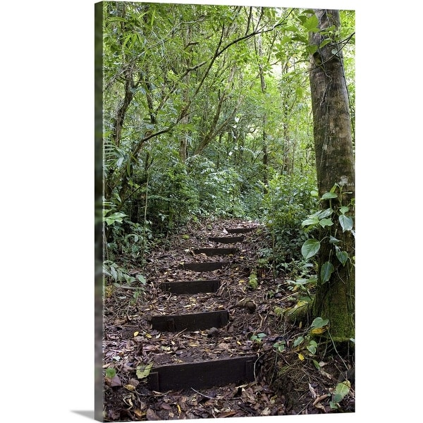 """""""Steps ascending on path, Tropical Cloud Forest, Costa Rica"""" Canvas Wall Art"""
