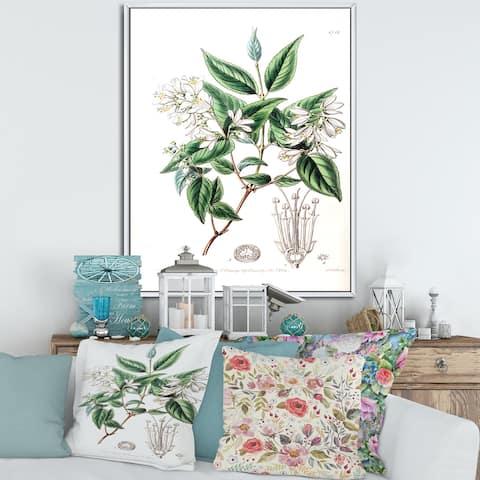 Designart 'Vintage Botanicals X' Traditional Framed Canvas Wall Art Print