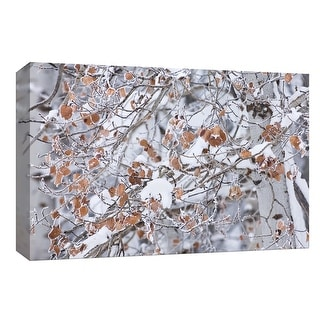 """PTM Images 9-153783  PTM Canvas Collection 8"""" x 10"""" - """"Grove of Aspen Trees"""" Giclee Forests Art Print on Canvas"""