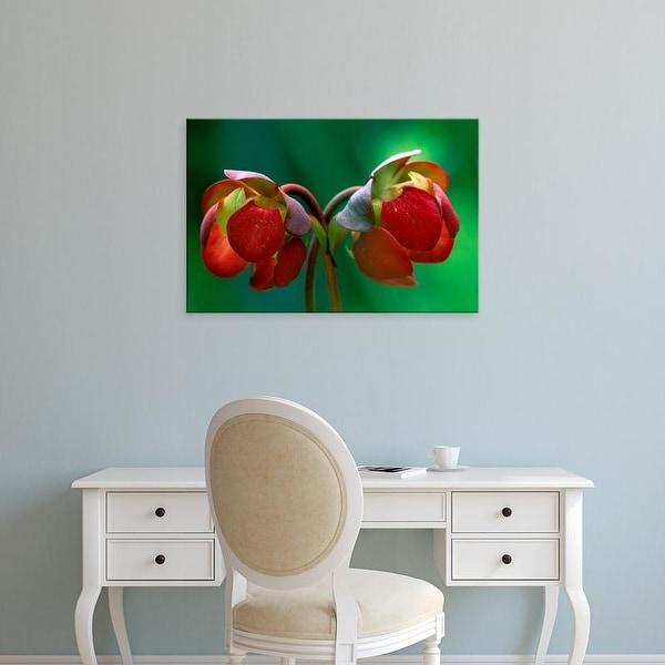 Easy Art Prints Claudia Adams's 'Pitcher Plant Blossom' Premium Canvas Art
