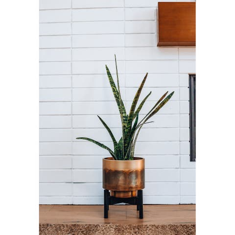Two Low Black Plant Stands