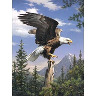 "Screaming Eagle - Paint By Number Kit Artist's Collection 9""X12"""