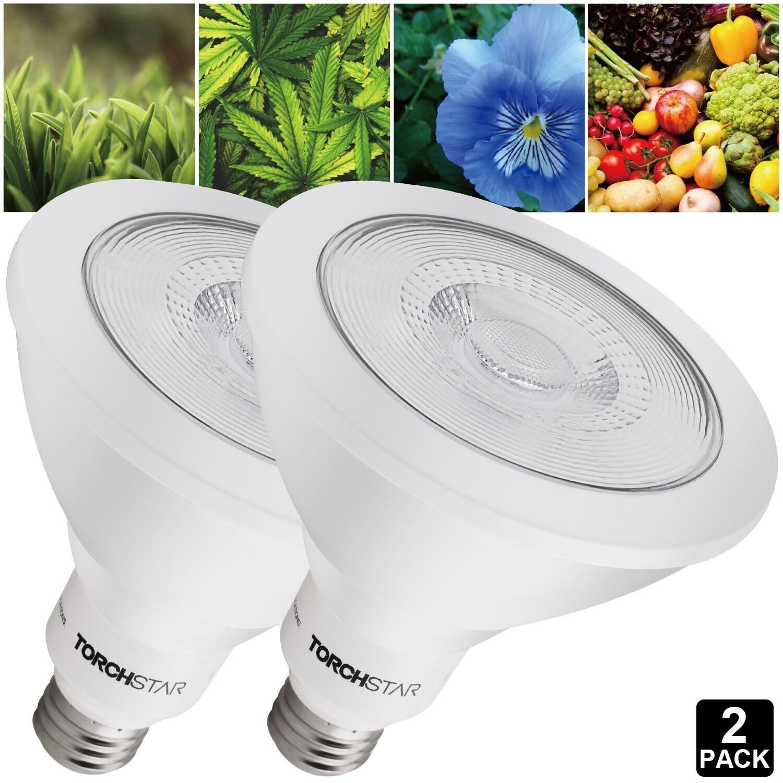 Plant Light Bulbs Kesho Wazo