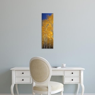 Easy Art Prints Panoramic Images's 'Aspen trees in a forest, Flagstaff, Arizona, USA' Premium Canvas Art