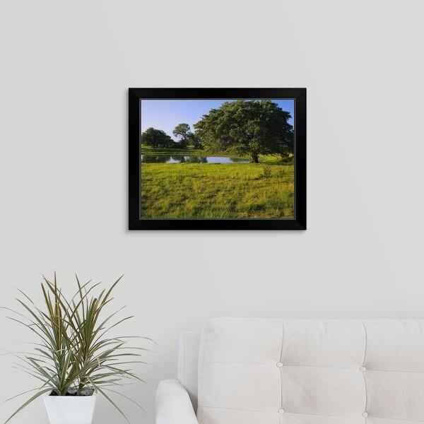 """Oak tree in a field, Tucson, San Rafael Valley, Santa Cruz County, Arizona"" Black Framed Print"