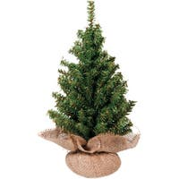 "Mini Canadian Pine Tree In Burlap 124 Tips, 18""-"