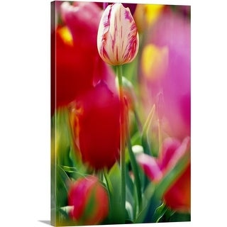Premium Thick-Wrap Canvas entitled Tulip Flowers In Bloom