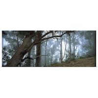 Poster Print entitled Trees in a forest, Rabacal, Madeira, Portugal - multi-color