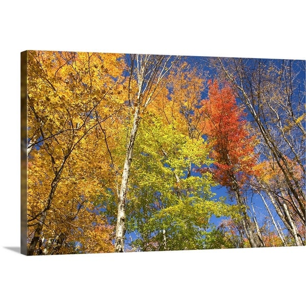 """Maple trees in autumn foliage, Green Mountains, Vermont"" Canvas Wall Art"