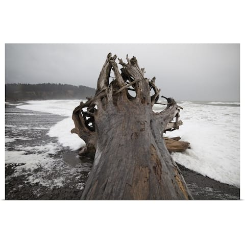 """""""A giant tree, come ashore as driftwood, on First Beach, Washington"""" Poster Print"""