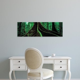 Easy Art Prints Panoramic Image 'Roots of a giant tree, Daintree National Park, Queensland, Australia' Canvas Art