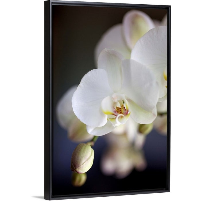 Shop White Japanese Orchids Flowers And Buds Black Float Frame