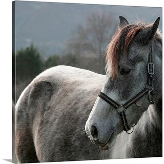 """""""Close-up of Horse"""" Canvas Wall Art"""