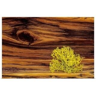 """Lichen on old bristle cone pine wood"" Poster Print"
