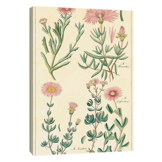 "PTM Images 9-108906  PTM Canvas Collection 10"" x 8"" - ""Geraniaceae 4"" Giclee Flowers Art Print on Canvas"