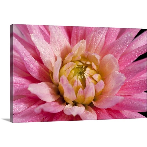 Large DAHLIA White Close Up Floral Flower Canvas Wall Art Picture