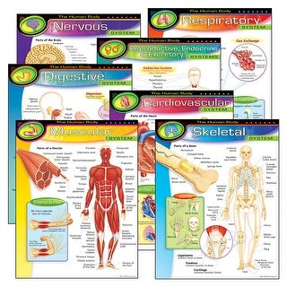 Chart Pk The Human Body 7/Pk 17X22 Gr 5-8