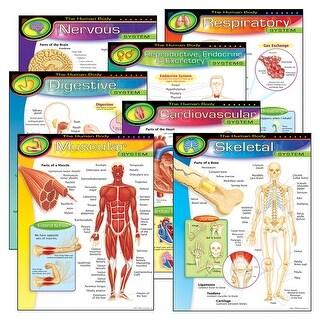 Chart Pk The Human Body 7/Pk 17X22