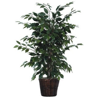 4' Ficus Bush - green dark