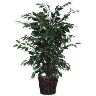 4' Ficus Bush - green dark