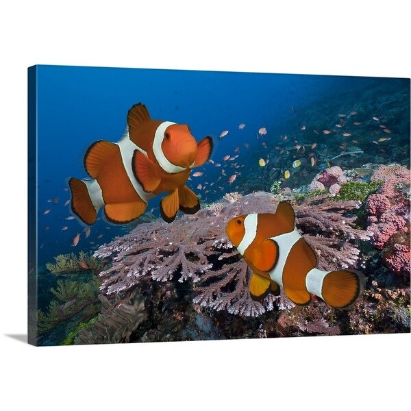 Shop Premium Thick Wrap Canvas Entitled Two Clownfish On