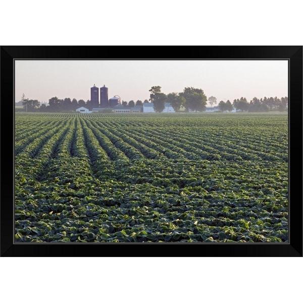 """Soy bean field, distant farm buildings, Iowa"" Black Framed Print"