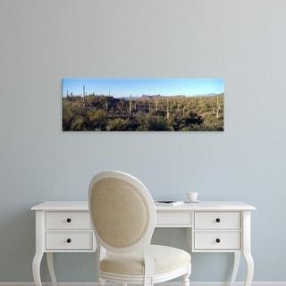 Easy Art Prints Panoramic Images's 'Saguaro Cacti New Mexico Arizona USA' Premium Canvas Art