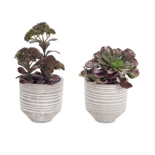 """Pack of 4 Artificial Perfectly Purple and Green Potted Succulents 9.5"""" - N/A"""