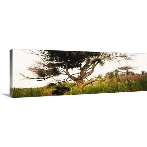 """Tree and plants in an Arboretum, Washington Park, Seattle, Washington State"" Canvas Wall Art"