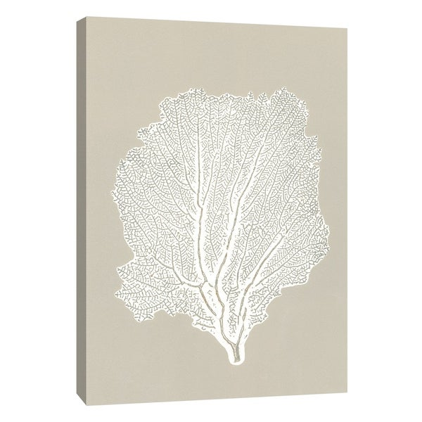 """PTM Images 9-105220 PTM Canvas Collection 10"""" x 8"""" - """"Sea Fan 5"""" Giclee Botanical Art Print on Canvas"""