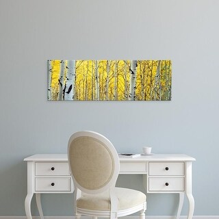Easy Art Prints Panoramic Images's 'Aspen trees in a forest' Premium Canvas Art