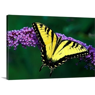 """""""Tiger Swallowtail Butterfly On Blooming Purple Flower"""" Canvas Wall Art"""