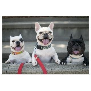 """Three French bulldogs"" Poster Print"