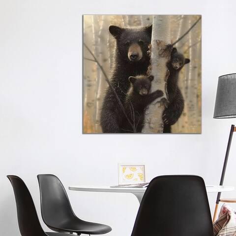 "iCanvas ""Mama Black Bear, Square"" by Collin Bogle Canvas Print"