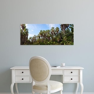 Easy Art Prints Panoramic Image 'Mexican fan palm trees, Las Palmas Beach,  Baja California Sur, Mexico' Canvas Art