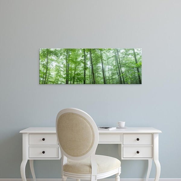 Easy Art Prints Panoramic Images's 'Trees in a forest, Hamburg, New York State, USA' Premium Canvas Art