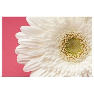 """""""White gerbera daisy on pink background."""" Poster Print"""