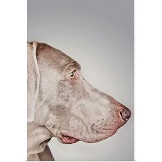 """Weimaraner dog"" Poster Print"