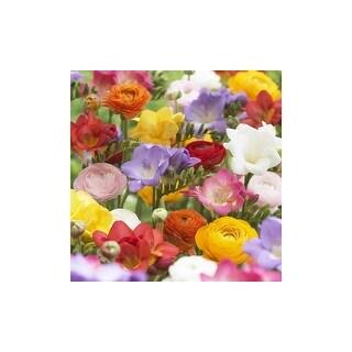 Persian Double Buttercup Flower Bulbs