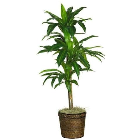 Nearly Natural 6585-0308 48 Inch Dracaena with Basket Silk Plant Real Touch