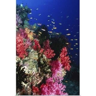 """Tropical coral reef"" Poster Print"
