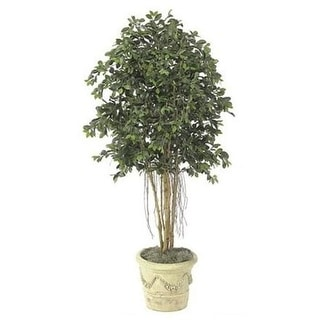 Autograph Foliages W-2610 - 6.5 Foot Multi-Trunk Ficus Tree - Green