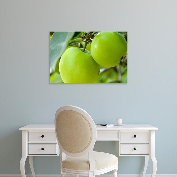 Easy Art Prints Paul Thompson's 'Two Cooking Apples On Tree' Premium Canvas Art