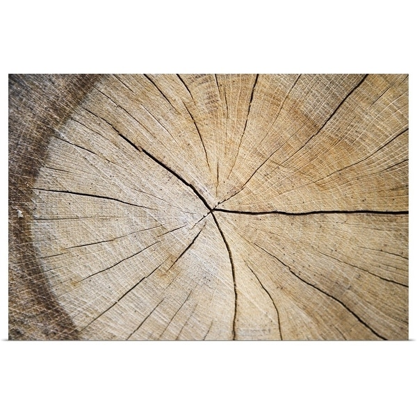 """Cross section of tree trunk"" Poster Print"
