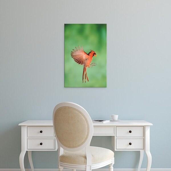 Easy Art Prints Rolf Nussbaumer's 'Northern Cardinal' Premium Canvas Art