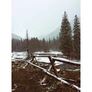 Pine Trees And Snow Photograph Art Print