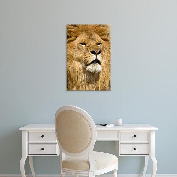 Easy Art Prints Joe & Mary Ann McDonald's 'African Barbary Lion' Premium Canvas Art